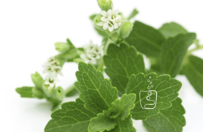 ¿Qué es la Stevia o Estevia?